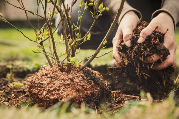 Mulch plays an important role in making the landscape beautiful
